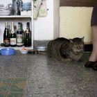 Photo Les vieux chats